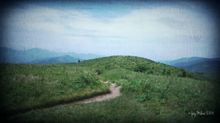 Black Balsam Knob and Tennent Mountain, Pisgah National Forest, NC 2014.